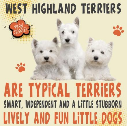 West Highland Terriers Metal Wall Sign
